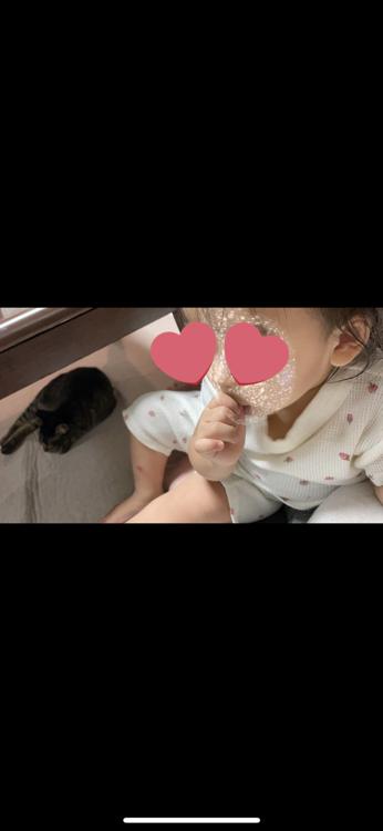 愛猫マロン